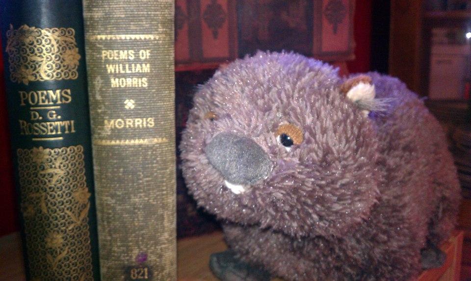 #wombatfriday