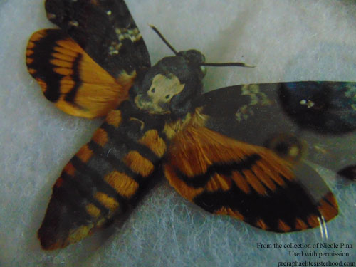 Specimen of Acherontia atropos (death's head hawk moth) from my daughter's collection.