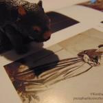 wombat-janemorris